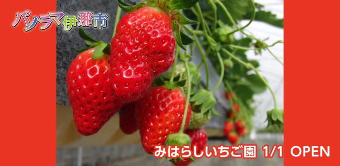 みはらしいちご園 1/1 OPEN